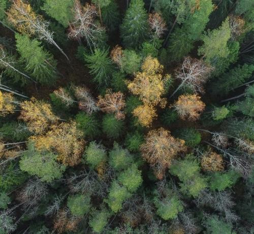Kaunis Eesti mets
