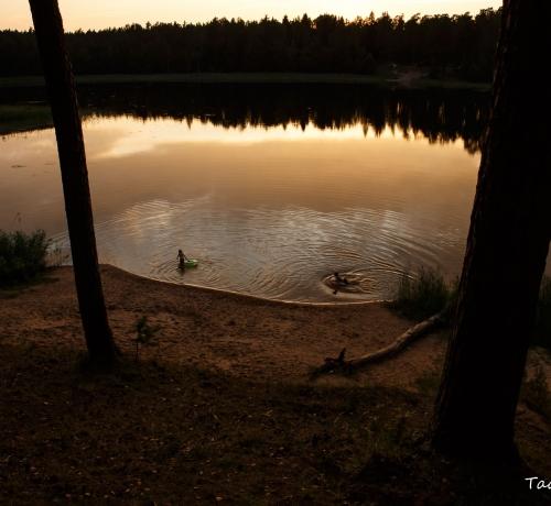 Õhtu metsajärve kaldal..