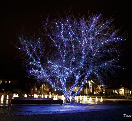 Särav puu...