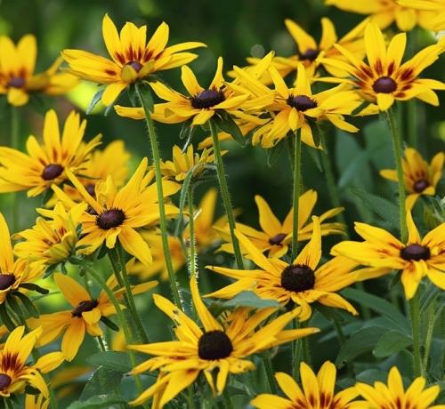Elu on lilleline
