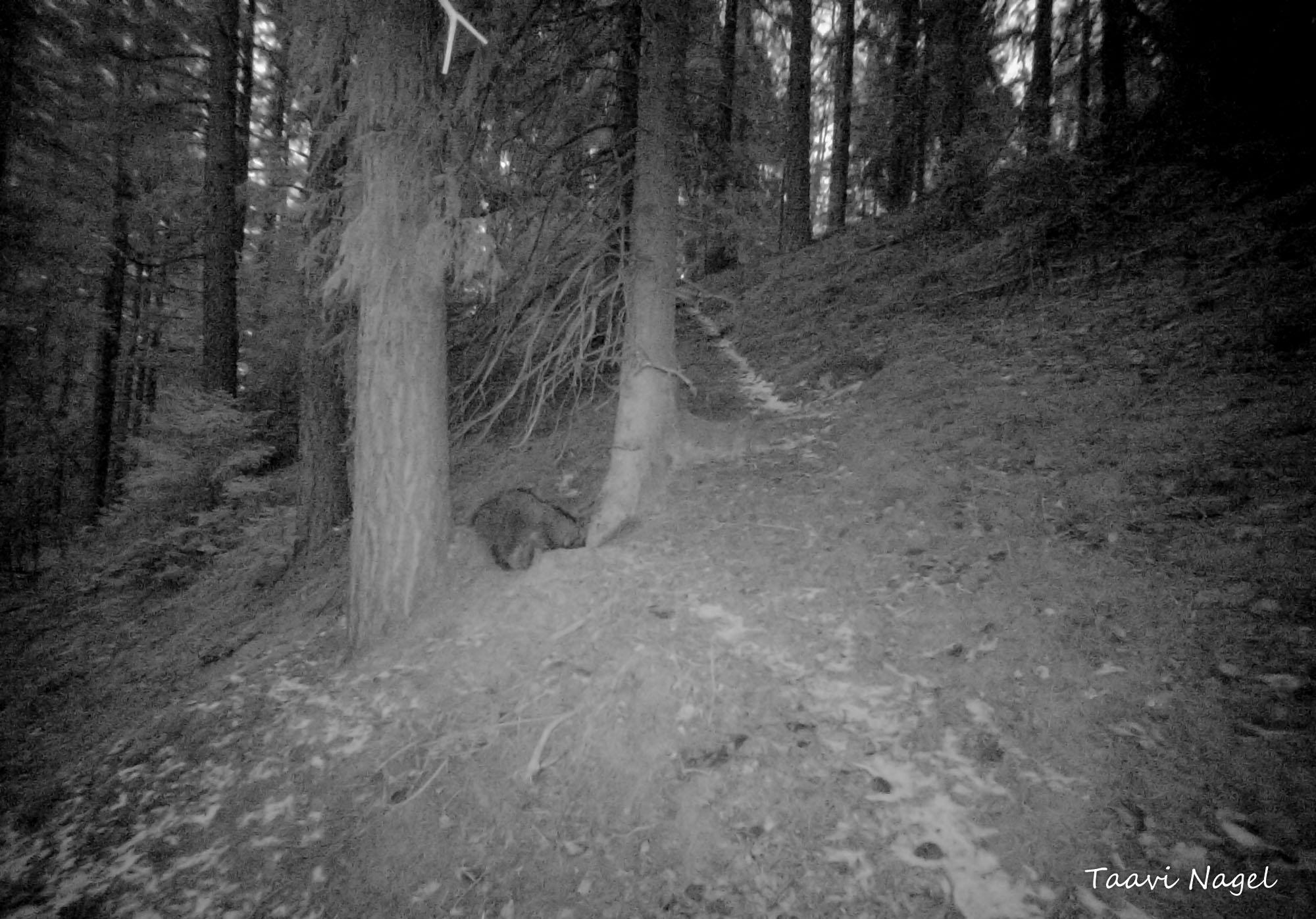 Pimedas metsas