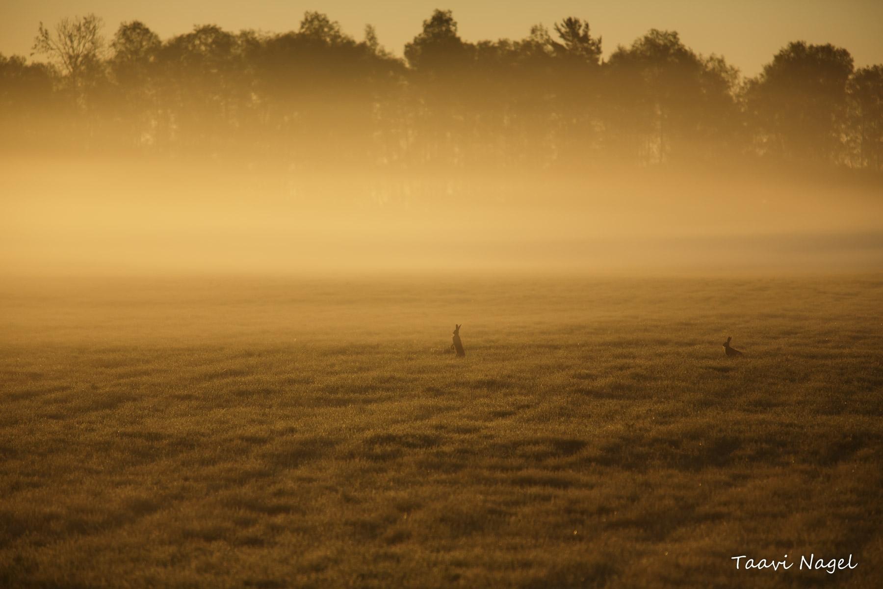 Üks ilusamaid hommikuid, mida minu silmad näinud on...