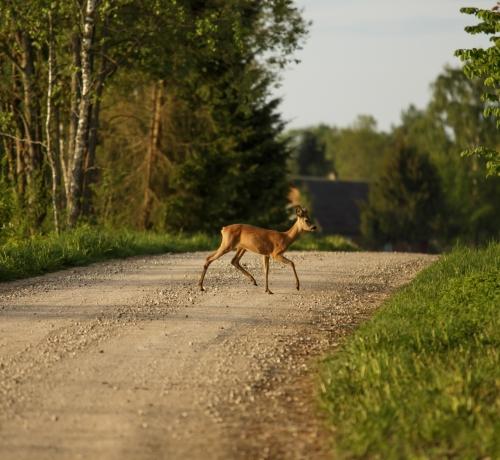 Ettevaatust jalakäija teel