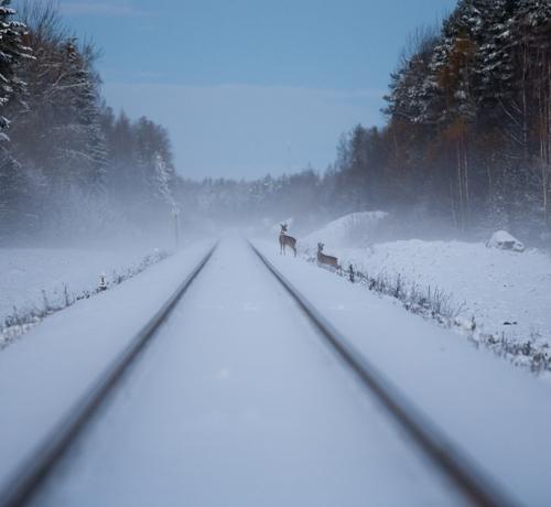 Tule kiiresti ,rong juba tuleb...