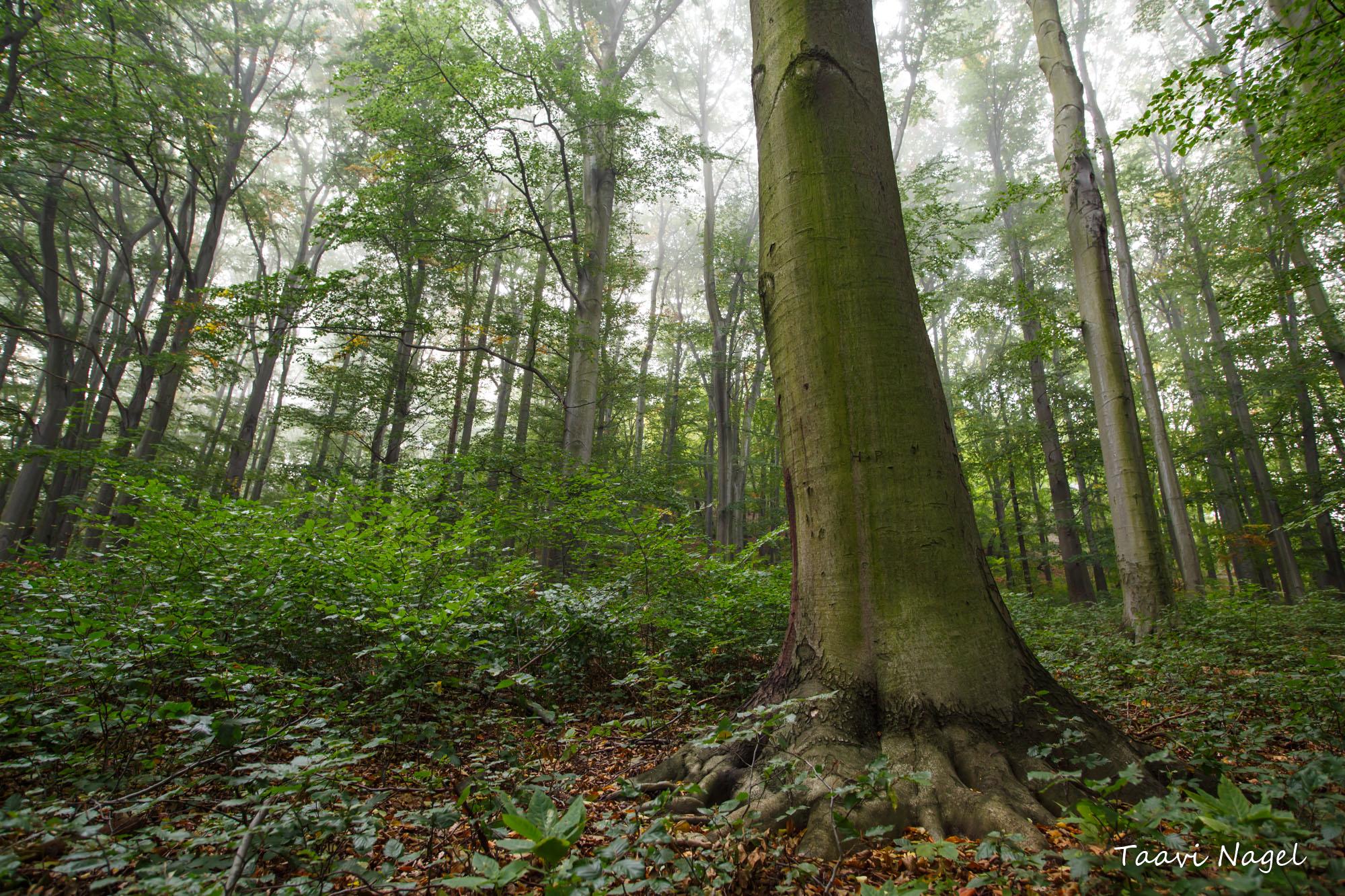 Tsehhi metsas