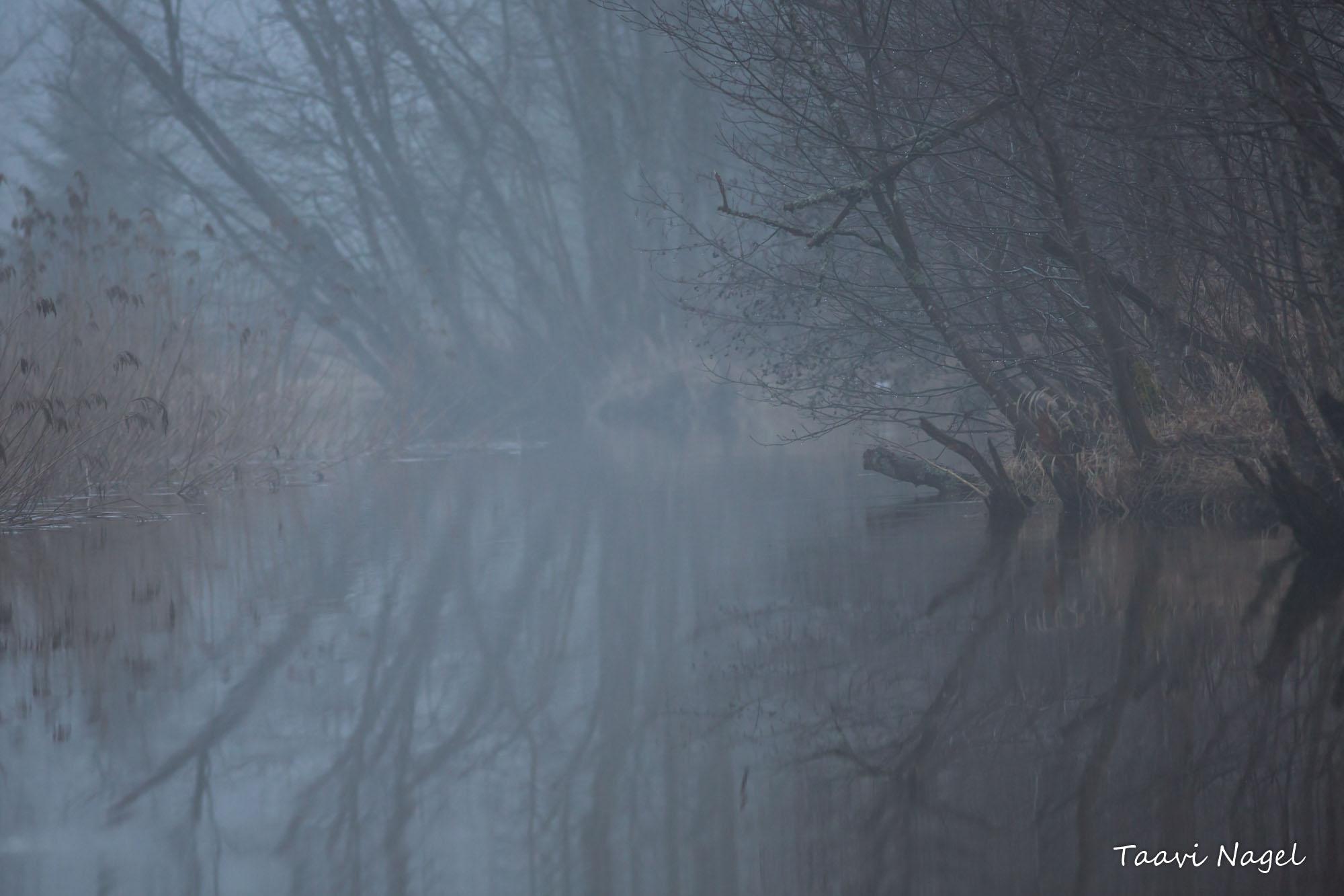 Jõgi hallis...