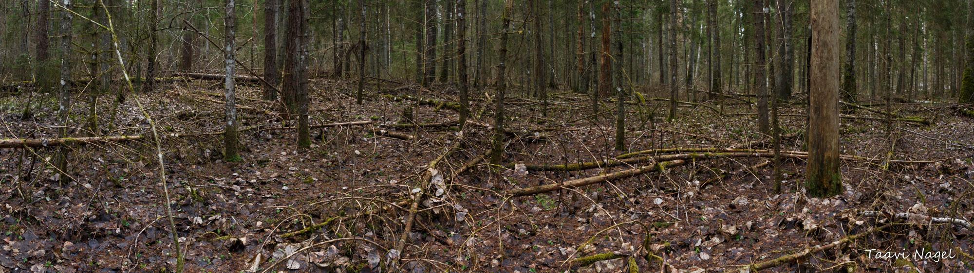 Ürgne eesti mets-panoraam
