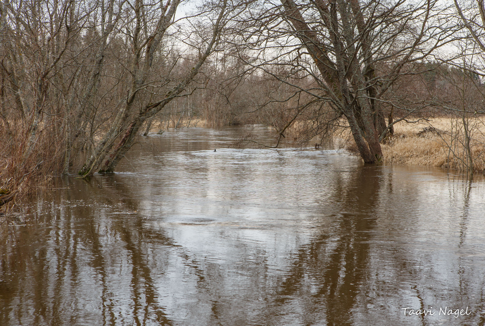 Kevadine jõgi..