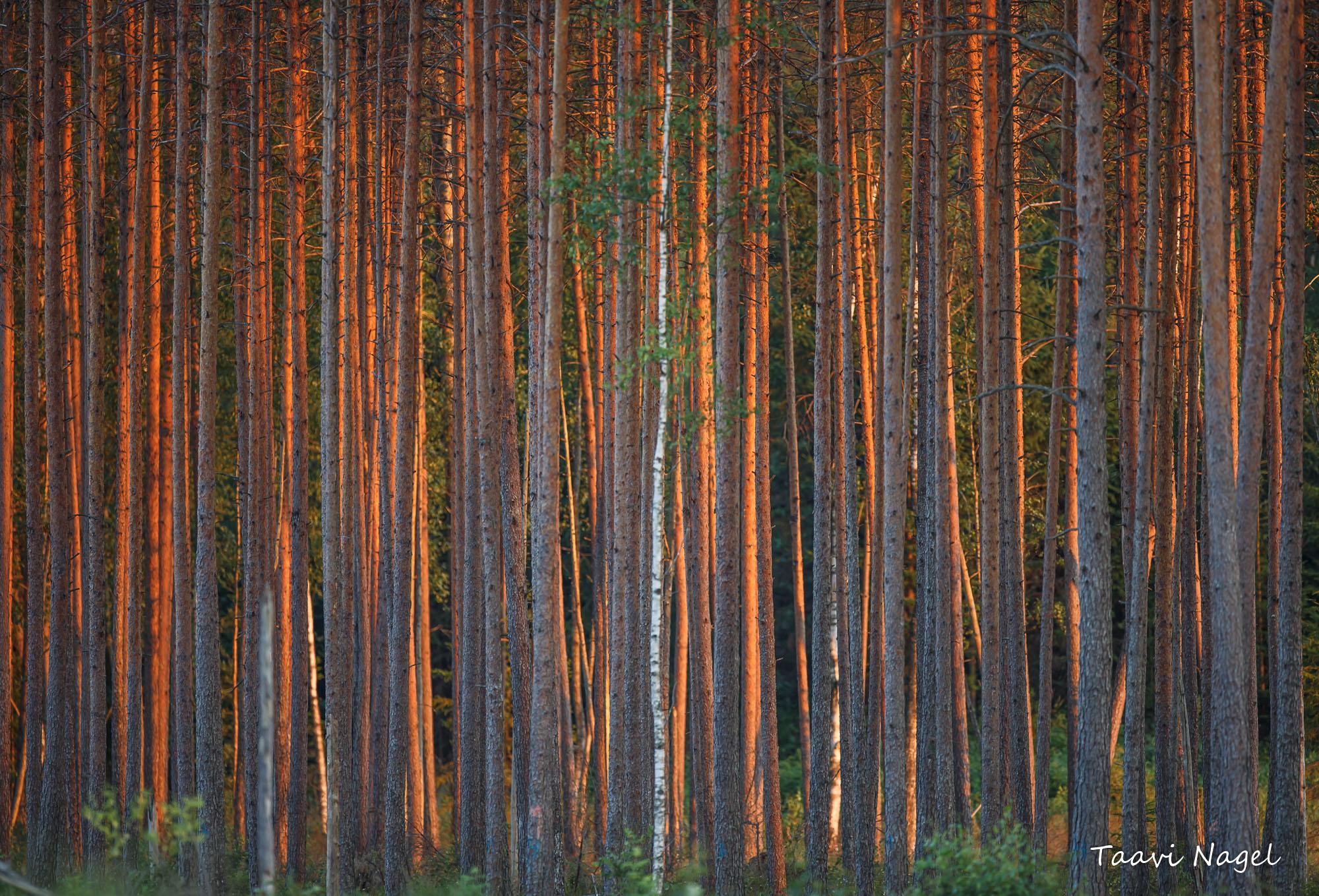 Eesti mets..