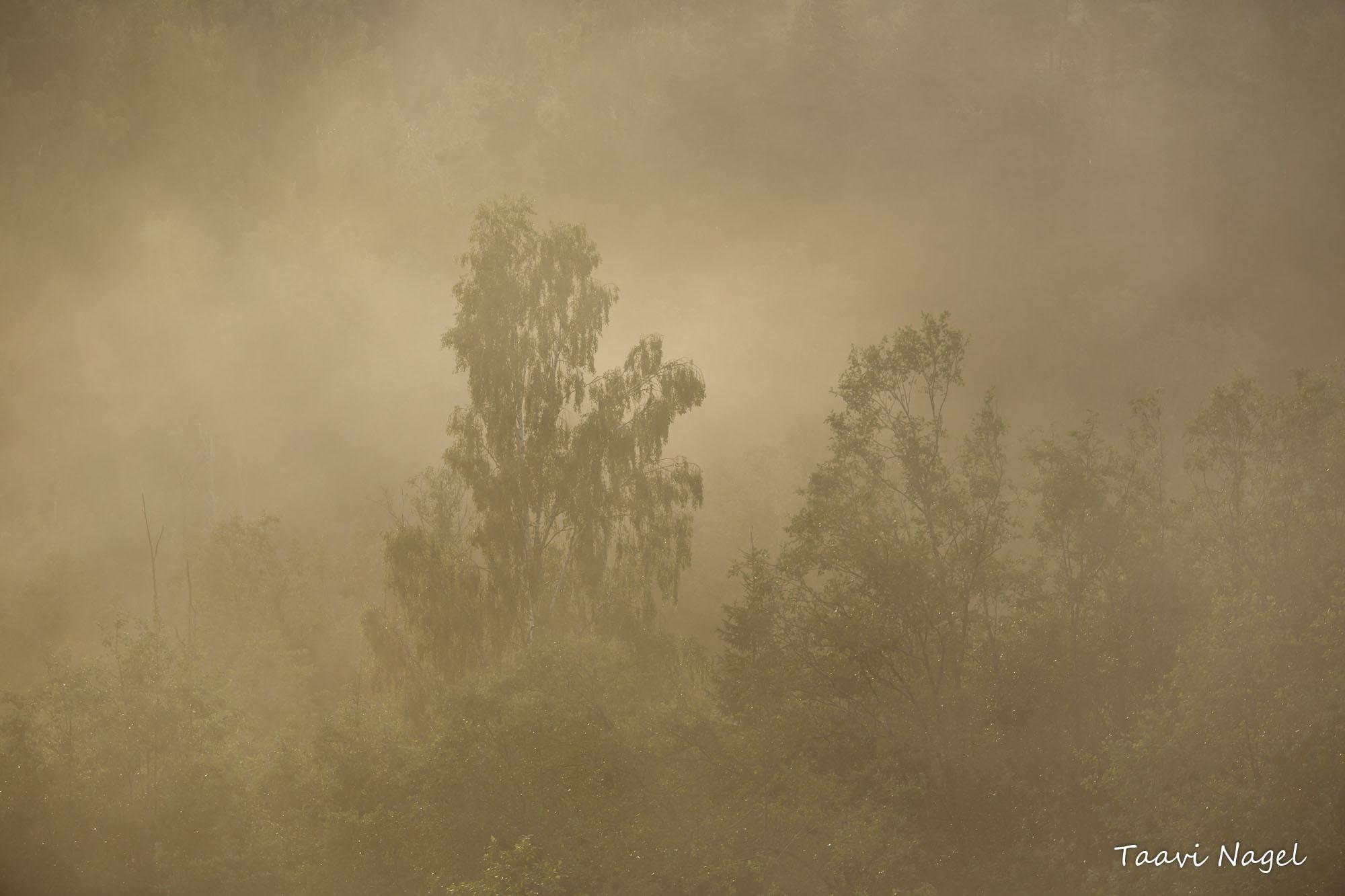 Lõuna-Eesti Amazonas...