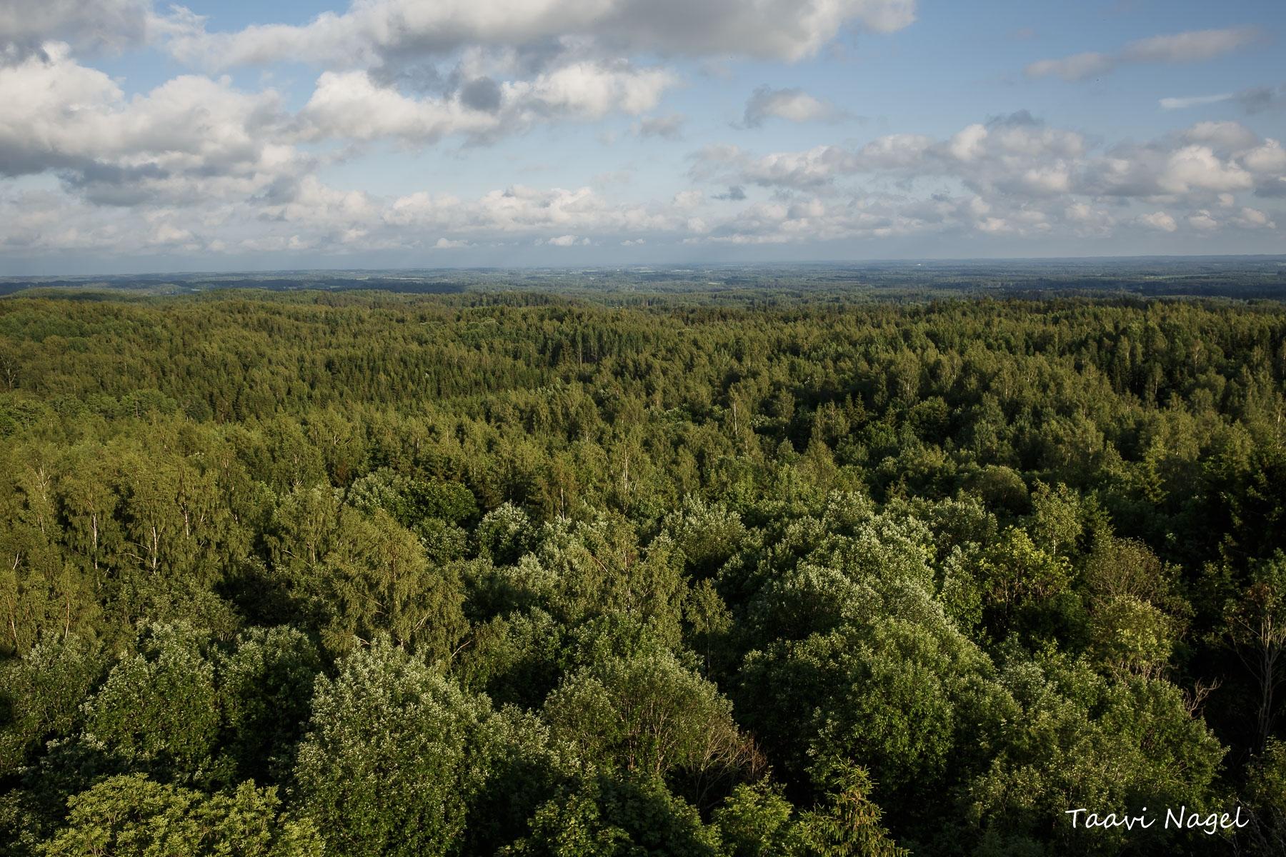 Suvine Lõune-Eesti maastik