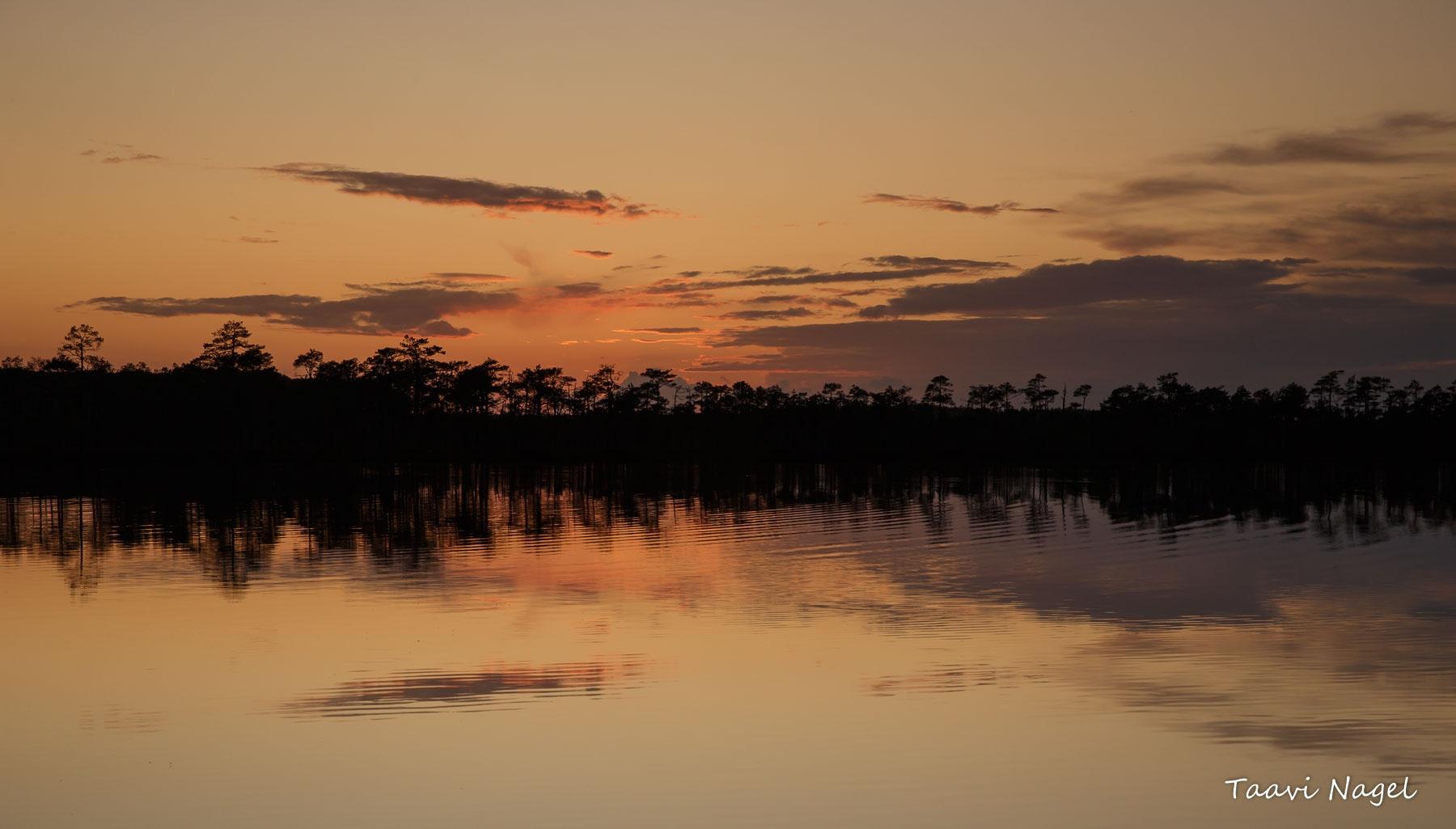 Õhtu rabajärve kaldal
