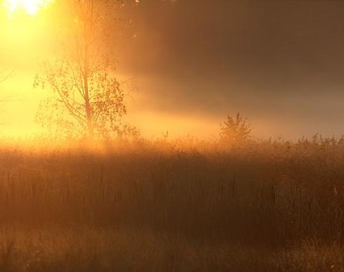 Kollane hommik