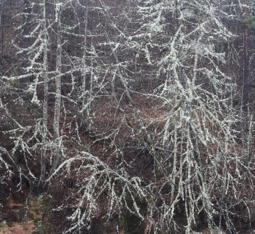 Sügis on langetand puudelt lehed