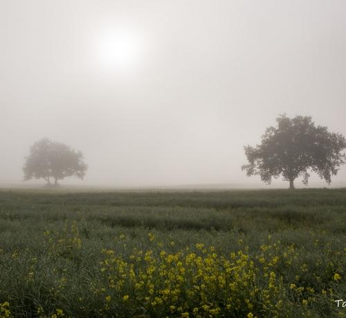 Müstiline loodus