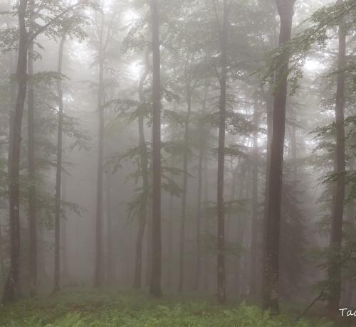 Muinasjutuline mets