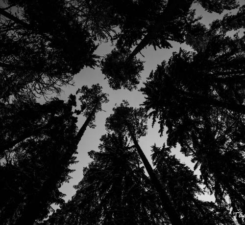 Ööööö metsas ....
