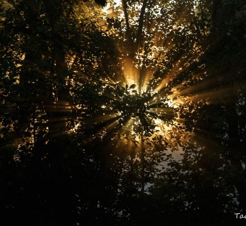 Saladuslik sära