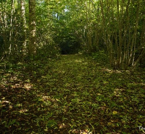 Sügisesel metsarajal