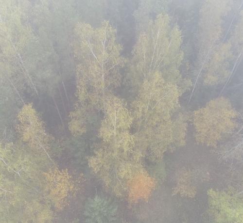 Sügis metsas