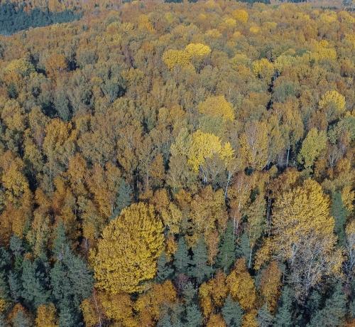 Sügisvärvid metsas