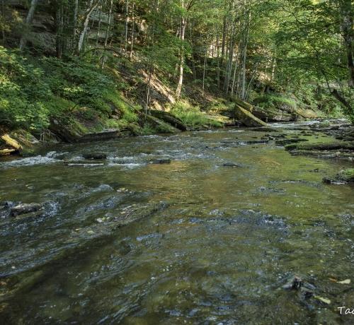 Valge jõgi..