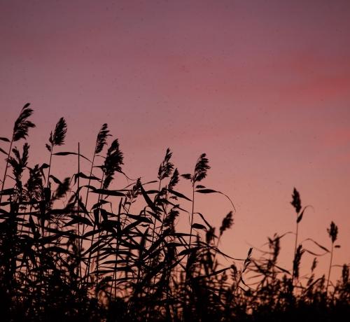 Värviline õhtu kõrkjates