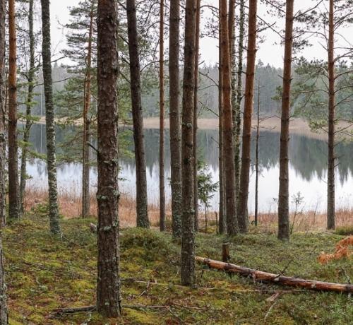 Kaunis mets koos veesilmaga
