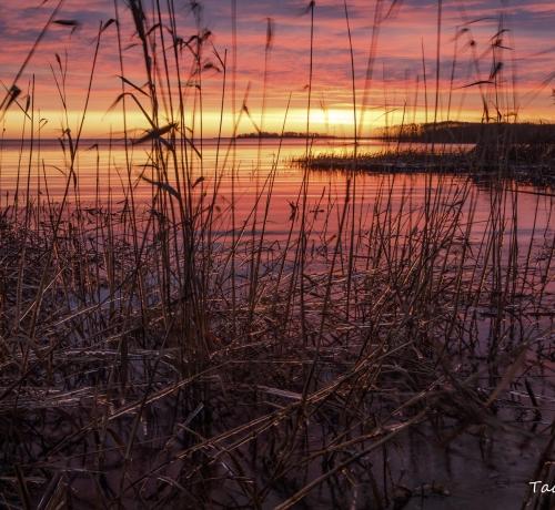 Järve kaldal..Kollast värvi märkab silm, muutub meie ümber  ilm. Päike särab, sooja annab, uude päeva valgust kannab.