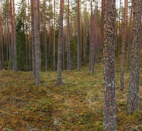 2020 eesti mets-Pano