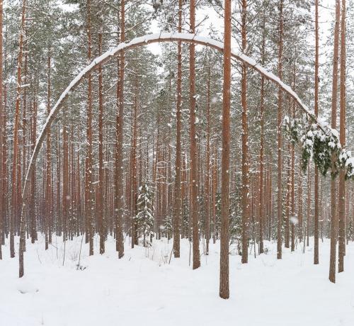 Vibu puu