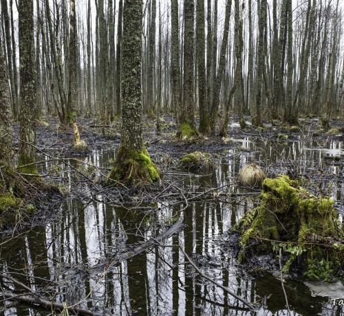 Talv taandub vaikselt metsas