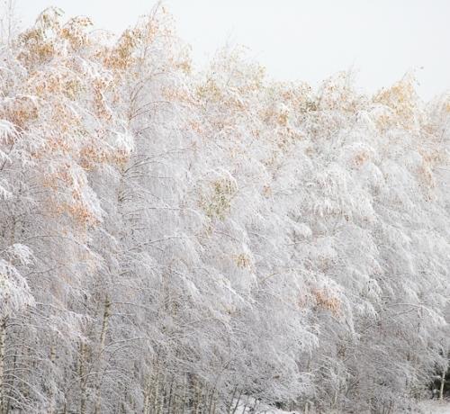 Lumi tuli maha ja valgeks sai maa...