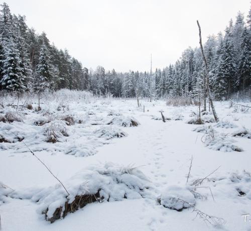 Pisuke talv on selleks aastaks vist läbi.....