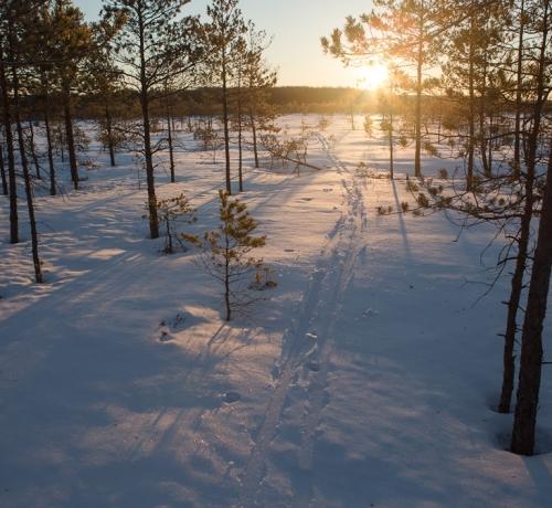 Jäljed lumel