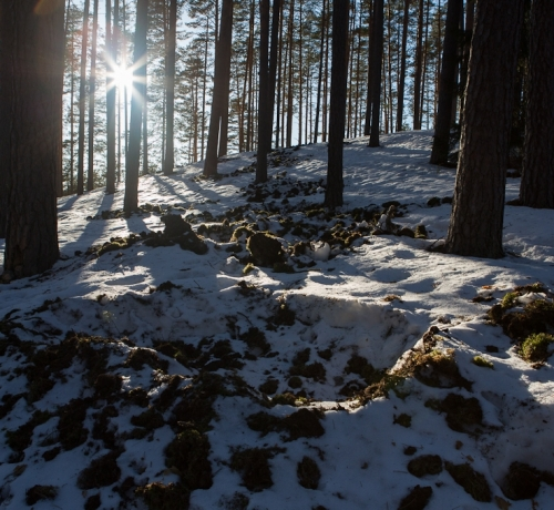 Talvine künd