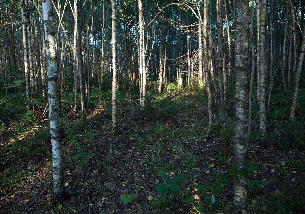 Õhtune jalutuskäik metsas