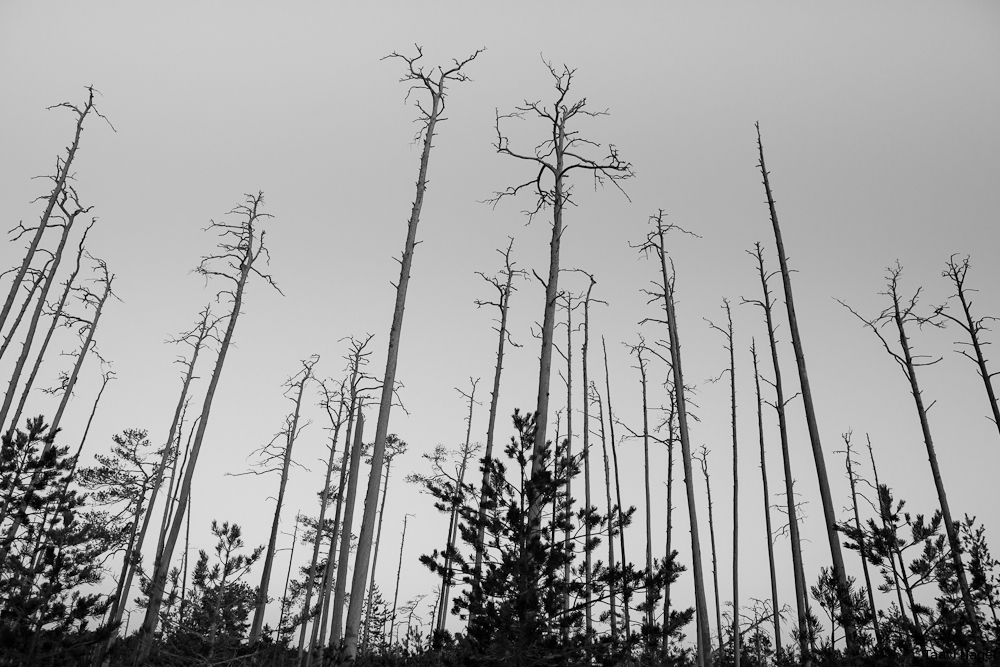 Kui seda metsa ees ei oleks....