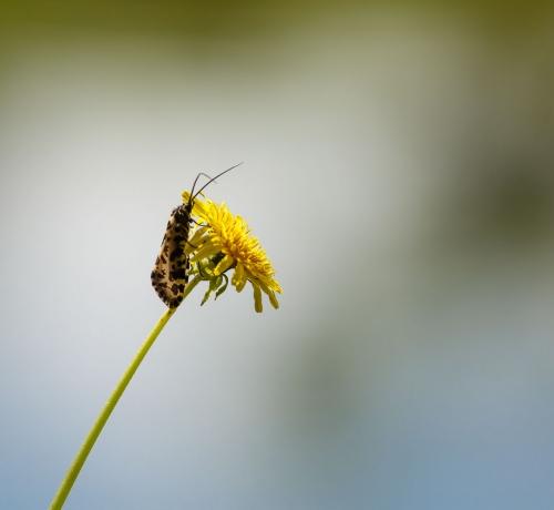 Lilleke ja liblikas