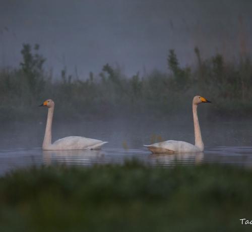 Luikede järv...