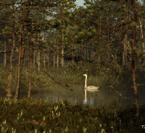 Luikede järv